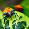 Шестиногие солдаты — история использования насекомых на войне