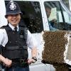 В Великобритании разрешено врываться в дом, где есть больные пчелы