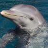 Дельфин с предпринимательскими способностями